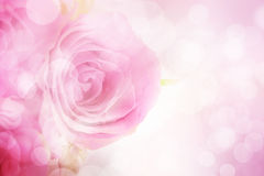 Sweet pink roses with bokeh effect on pink background Stock Images