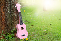 Sweet pink ukulele music green grass background Royalty Free Stock Image