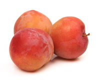 Sweet plum Stock Images