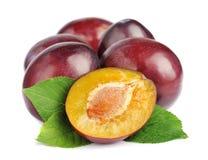 Sweet plums fruit Stock Photography