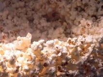 Sweet popcorns royalty free stock photography