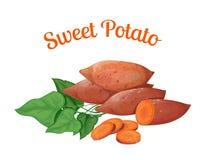 sweet potato ilustracja wektor
