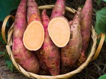 sweet potato zdjęcie stock