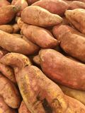 sweet potato Obrazy Royalty Free