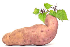 The sweet potato - batat Royalty Free Stock Image