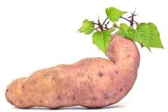 The sweet potato - batat Royalty Free Stock Image