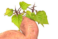 The sweet potato - batat Stock Image