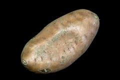Sweet Potato on a Black Background Stock Photos