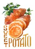 Sweet potato. Hand drawing watercolor on white background with title. stock illustration