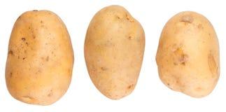 Sweet Potato II Royalty Free Stock Images