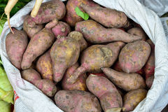 Indian vegetable-Sweet Potato Royalty Free Stock Photo