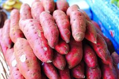 Sweet potato or kumara Royalty Free Stock Photos
