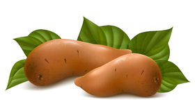 Sweet potato with leaves. Royalty Free Stock Images