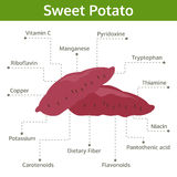 Sweet potato nutrient of facts and health benefits, info graphic Royalty Free Stock Photography