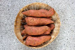 Sweet potato. Shakar kandi, Ipomoea batatas, Convolvulaceae, a vine producing tuberous roots eaten after baking, used in chat preparations royalty free stock photo