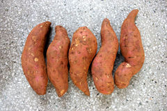 Sweet potato. Shakar kandi, Ipomoea batatas, Convolvulaceae, a vine producing tuberous roots eaten after baking, used in chat preparations royalty free stock image