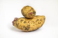 Sweet potato at white background Stock Image