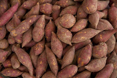Sweet Potato. Whole Raw Red Sweet Potato Royalty Free Stock Photos