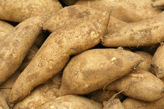Sweet potatoes. The background of many sweet potatoes Stock Photo