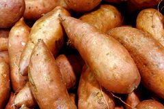 Sweet Potatoes. Many Sweet Potatoes royalty free stock photos