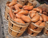 Sweet Potatoes In Bushels Royalty Free Stock Photo