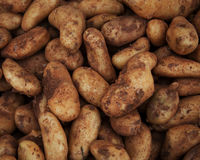 sweet potatoes on market stand Royalty Free Stock Images