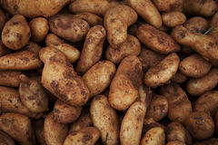 Sweet potatoes on market stand Royalty Free Stock Image