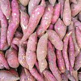 Sweet potatoes. The potato is a starchy, tuberous crop from the perennial nightshade Solanum tuberosum. Potato may be applied to both the plant and the edible Royalty Free Stock Images