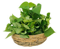 Sweet potatos leave. Many sweet potatos leaves in bamboo basket Royalty Free Stock Images