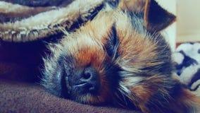 Sweet pup Stock Photo