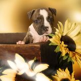Sweet puppy. Puppy with sunflowers royalty free stock image
