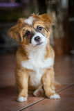 Sweet puppy with an angled view Royalty Free Stock Image