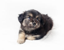 Sweet puppy dog Stock Images