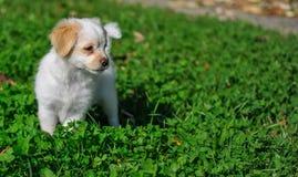 Sweet puppy Stock Photos
