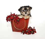 Sweet Puppy With Red Flowers Stock Images