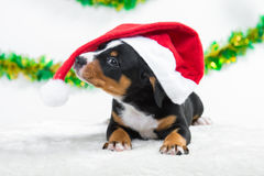 Sweet puppy in red santas hat, Christmas costume Royalty Free Stock Photos