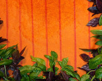 Sweet and Purple Basil on an Orange Towel, Background Horizontal. Freshly washed basil, or osicum basilicum, herb leaves are shown drying on an orange terry Royalty Free Stock Photos