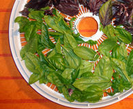 Sweet and Purple Basil on a Round Dehydrator Screen, Horizontal 2. Basil leaves are laid out on a screen in preparation for dehydrating.  They are still shiny Stock Photos