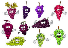 Sweet purple, green and red grape fruits Stock Photos