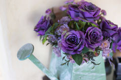 Sweet purple roses in watering can Royalty Free Stock Images