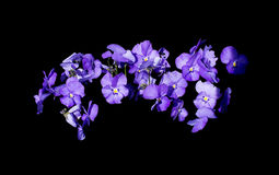Sweet purple violet flowers Royalty Free Stock Image