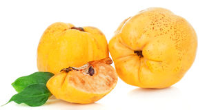 Sweet quinces Stock Images