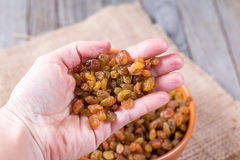Sweet raisins in hand Royalty Free Stock Images