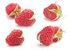 Sweet raspberry Stock Photo