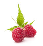 Sweet raspberry isolated on white background cutout Stock Images