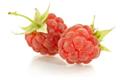 Sweet raspberry Royalty Free Stock Photography