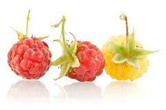 Sweet raspberry Royalty Free Stock Images