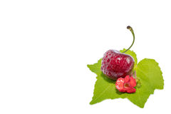 Sweet Red cherries isolated on a white background. Sweet Red cherries on white background as package design element Royalty Free Stock Photo