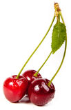 Sweet red cherry. With leaves isolated on white stock photos
