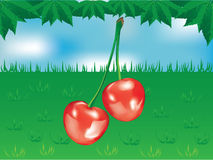 Sweet red cherry. On the green grass and blue sky Stock Photography
